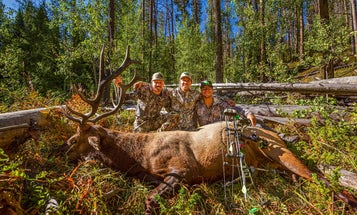 Lessons Learned from a Successful DIY Public-Land Elk Hunt