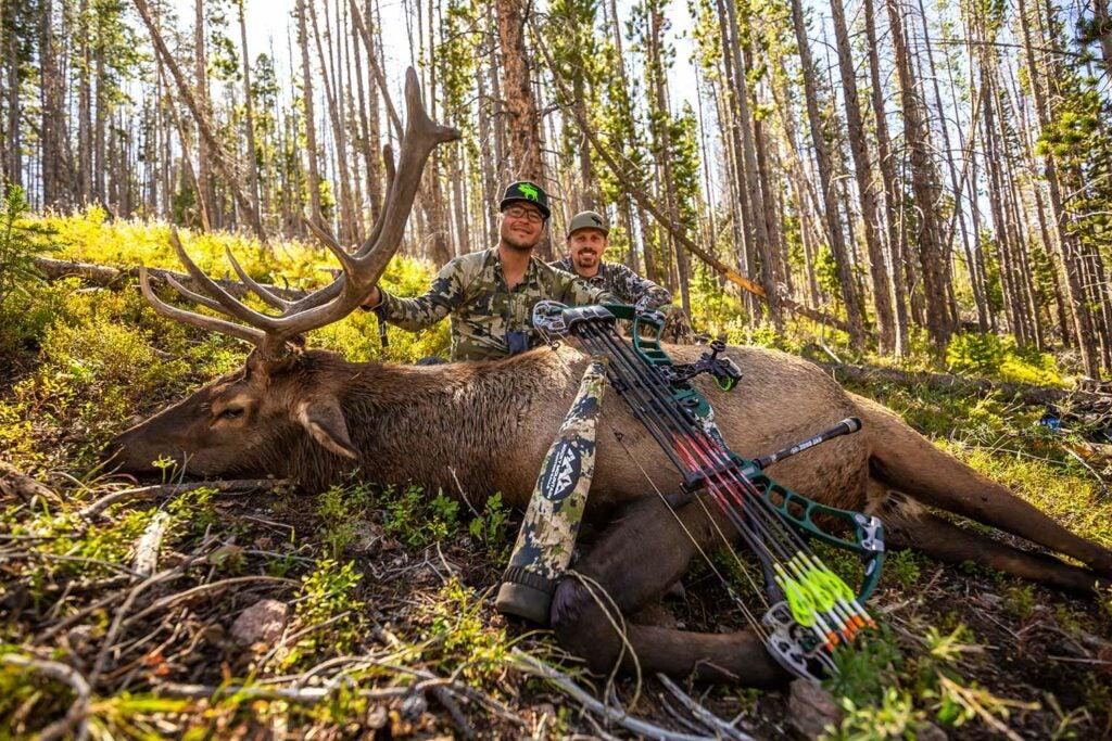 two hunters kneeling behind a giant elk