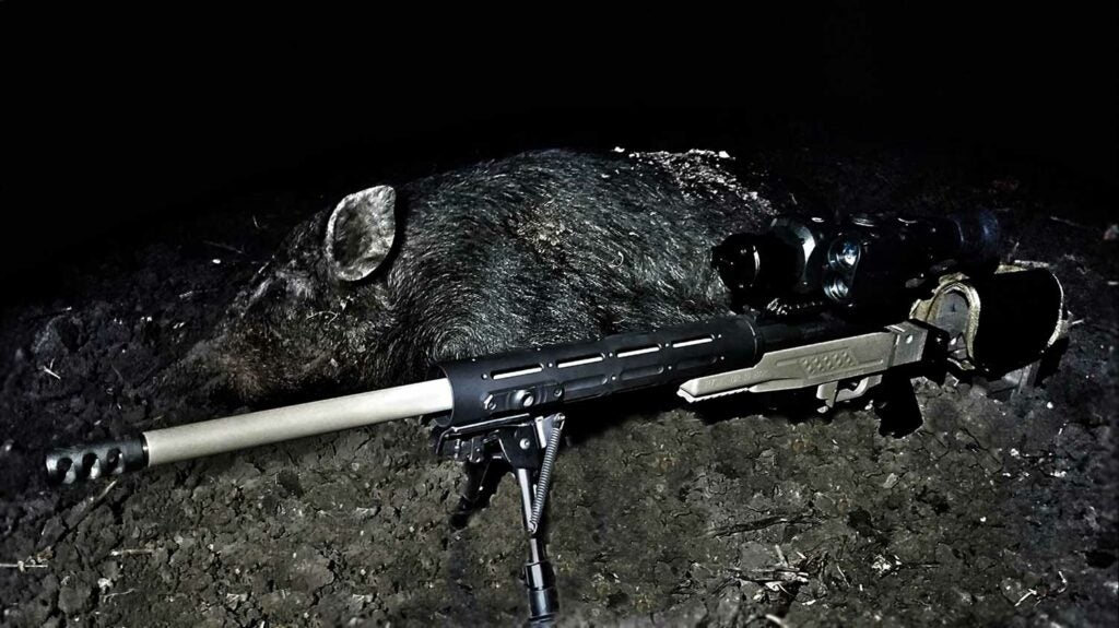 remington 700 winchester rifle and hog