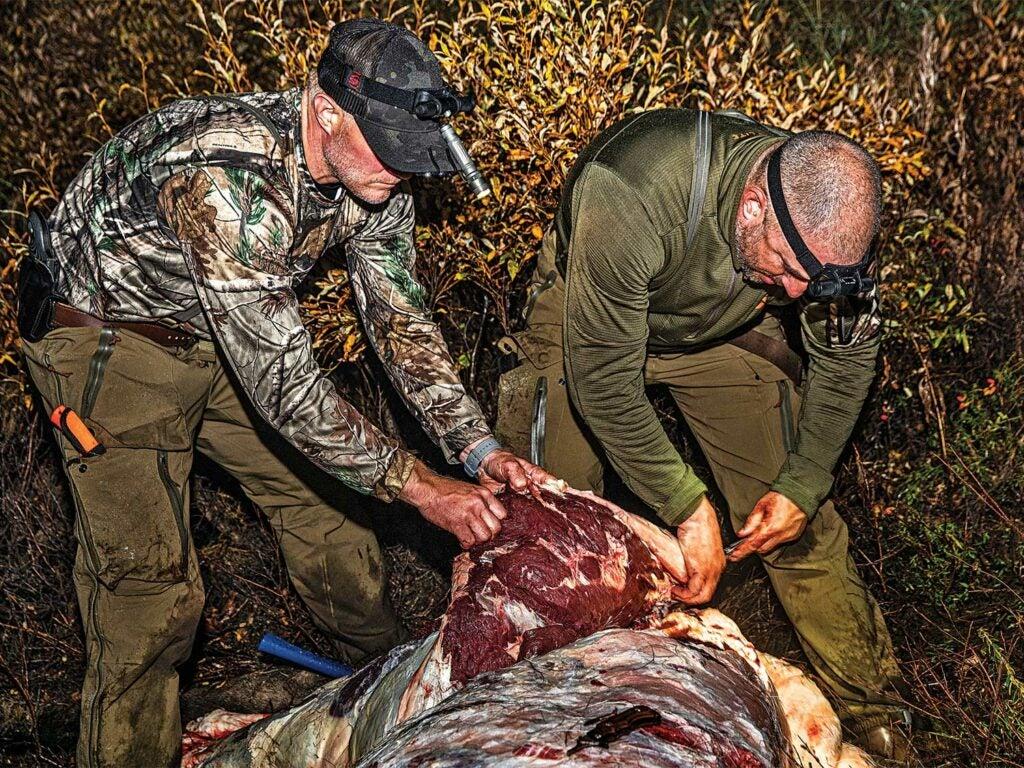 two elk hunters quartering a bull elk