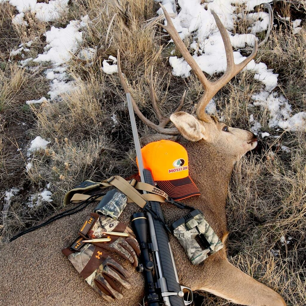a mature muley buck with hunting gear on it