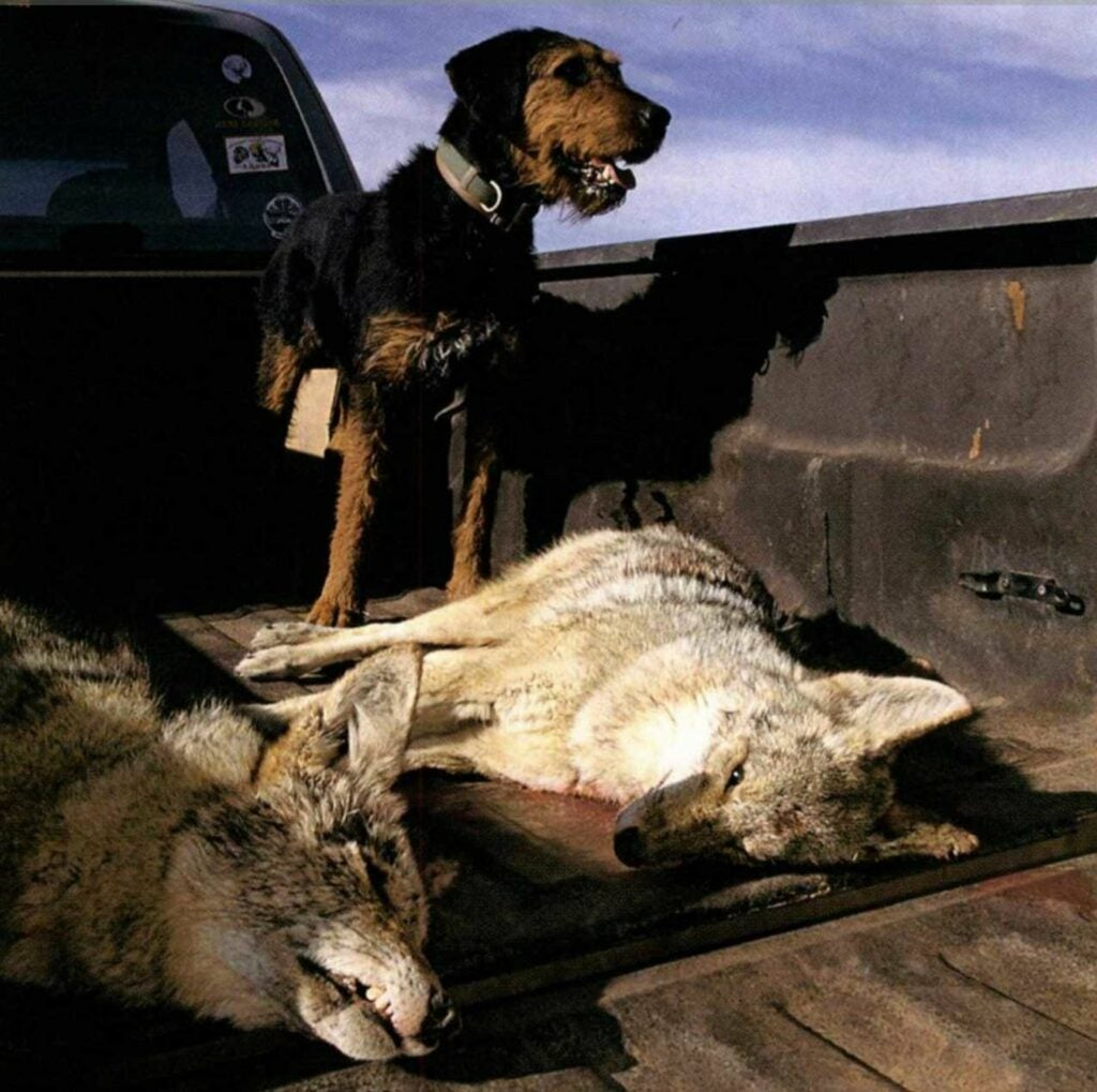 Most hunting dogs chase or sniff out game.