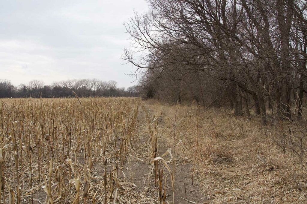 a habitat transition from field to tree line
