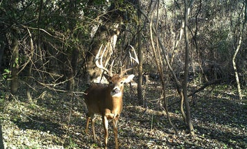 5-Step Strategy for Running Trail Cams on a New Property