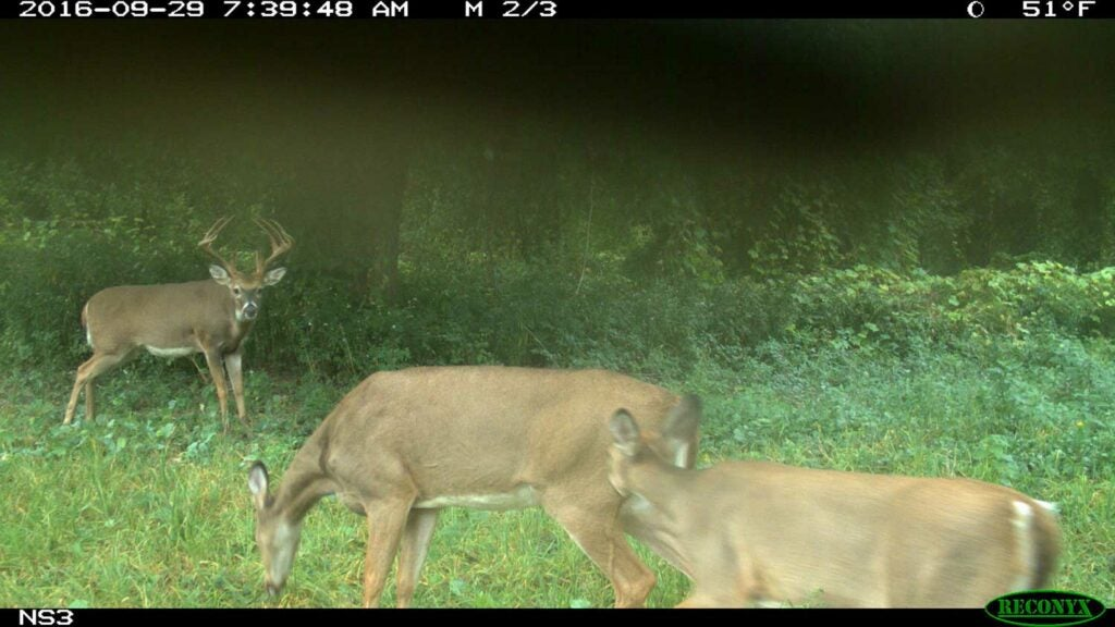 deer caught on trail camera in the woods