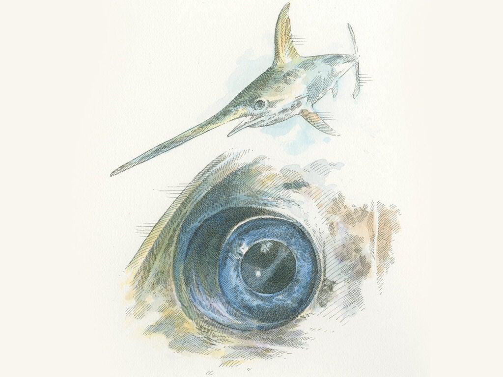 illustration of swordfish and an eye