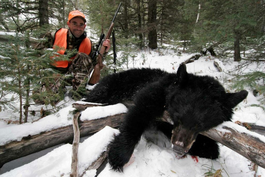 black bear and andrew mckean