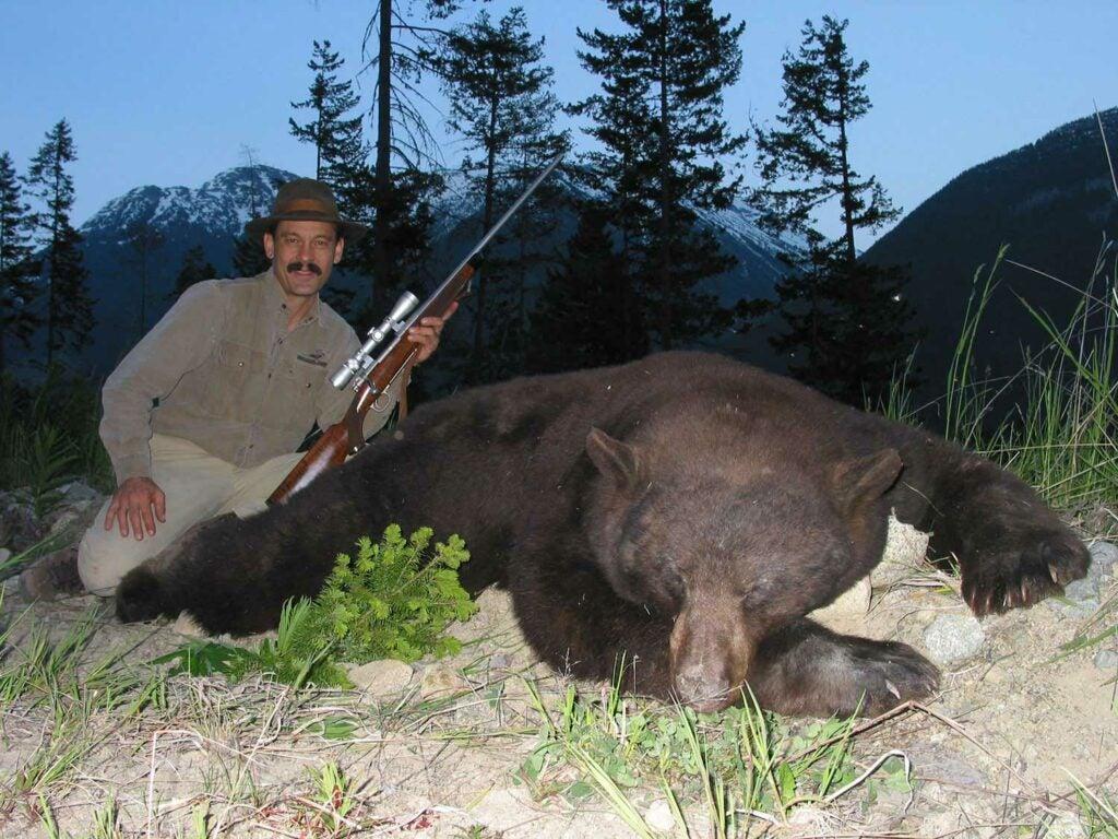 large brown bear and hunter