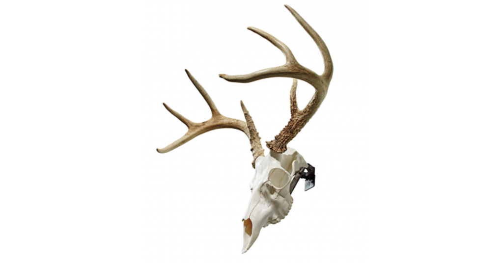 The Skull Master kit gives you the option of a full skull mount without the pains of dealing with the real skull.
