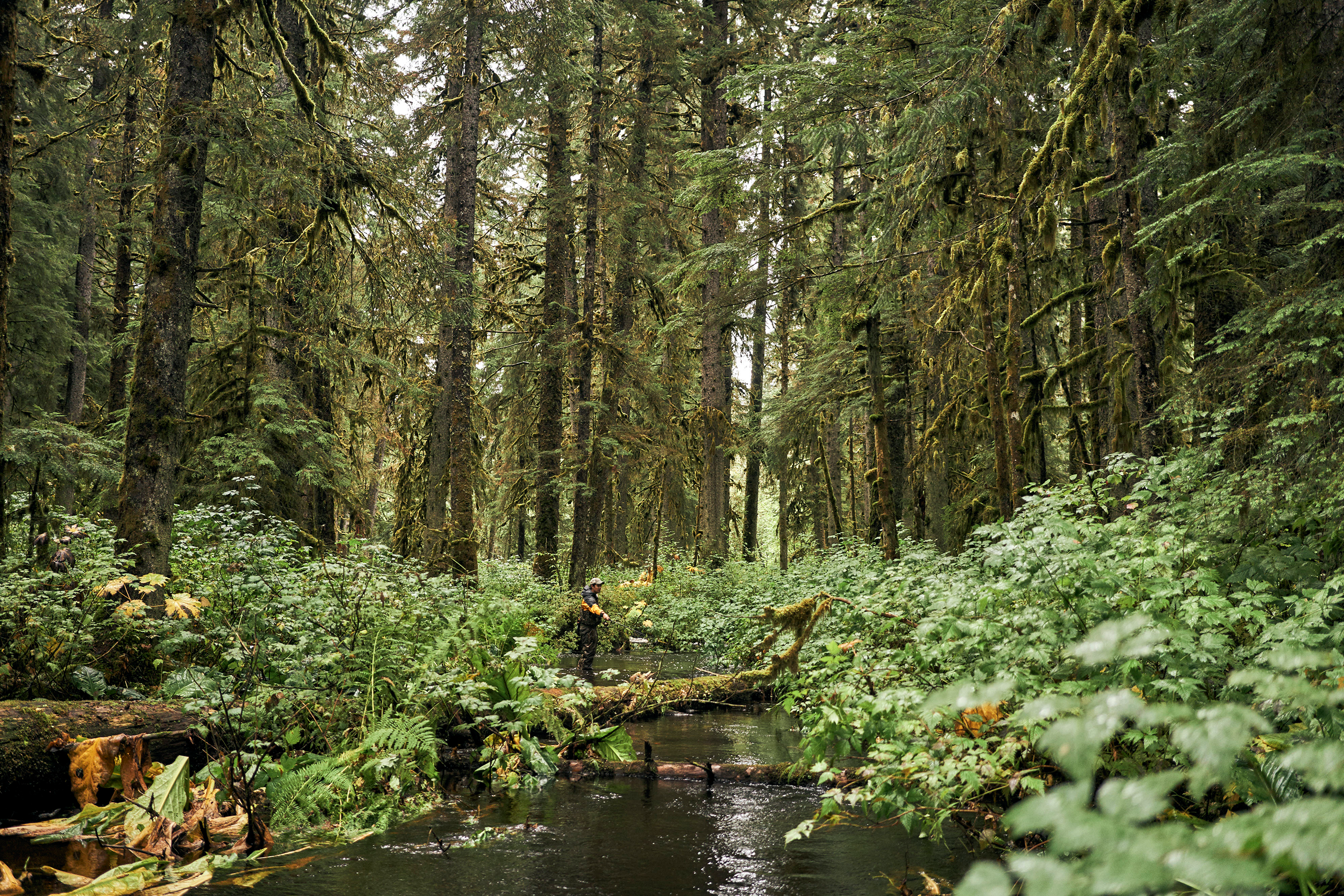 The Forest Service Wants to Open 9.2 Million Roadless Acres to Potential Logging. Here's Your Chance to Say Something About It