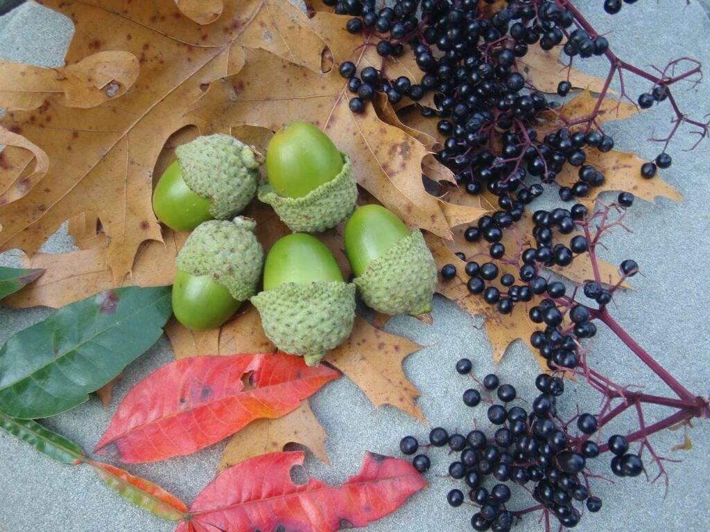 acorn mush ingredients