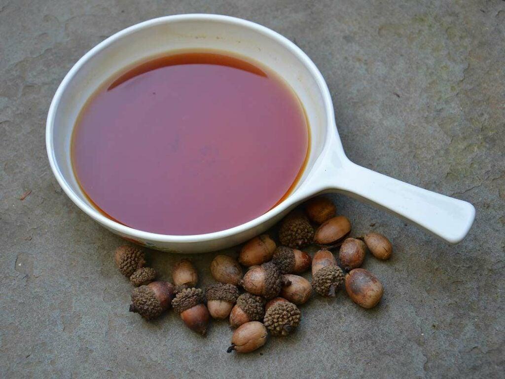 bowl of acorn water