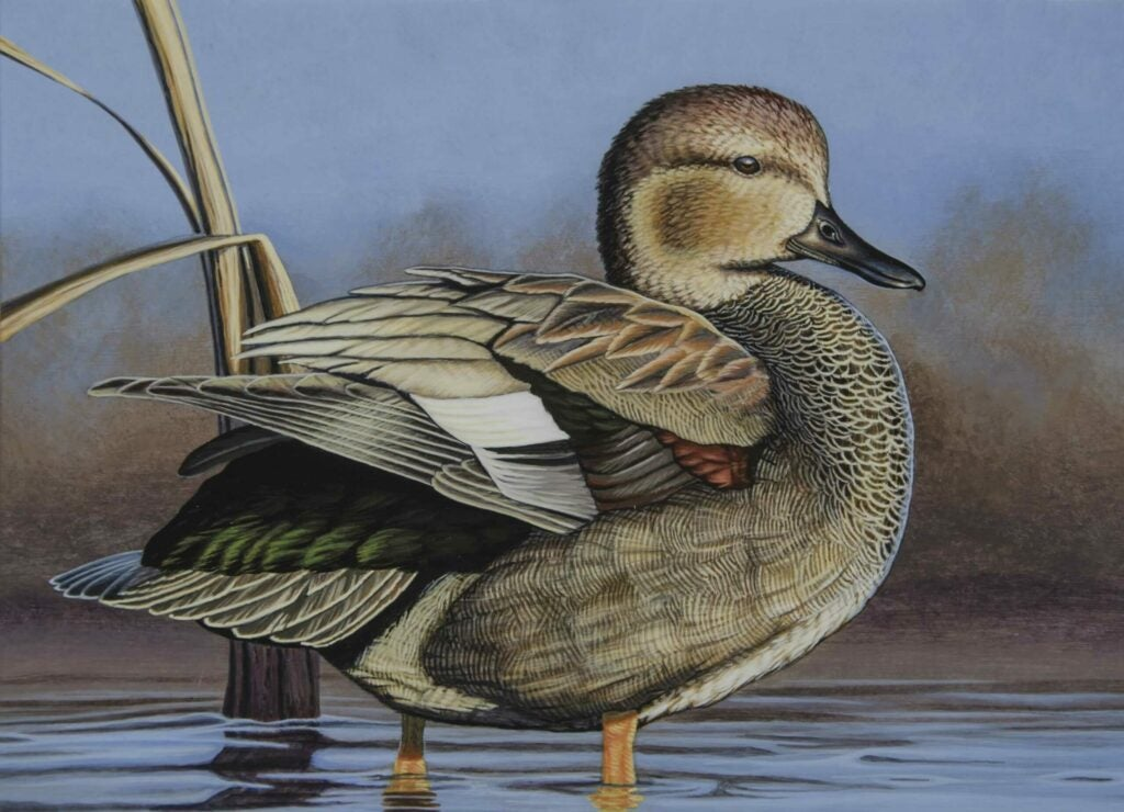 mn waterfowl stamp