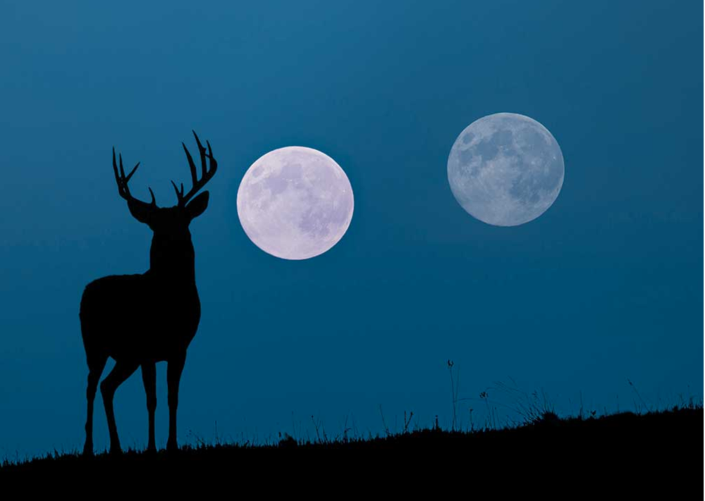 How does moon phase really affect deer movement?