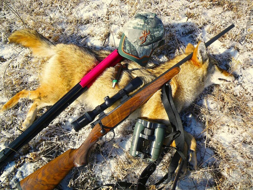 custom .243 Win for hunting coyotes