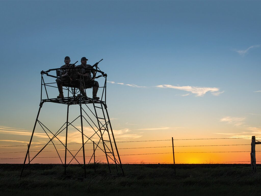Tower-stand hunters await the arrival of feeding pigs near Midlothian, Texas.