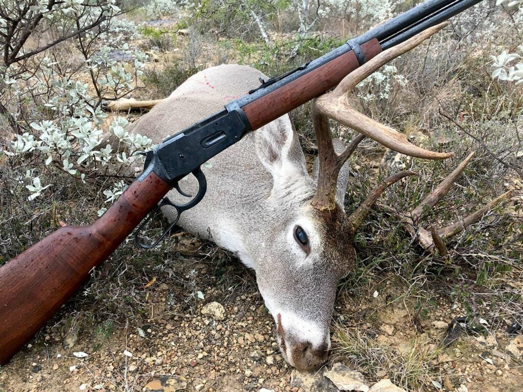 whitetail deer with a rifle on its antlers