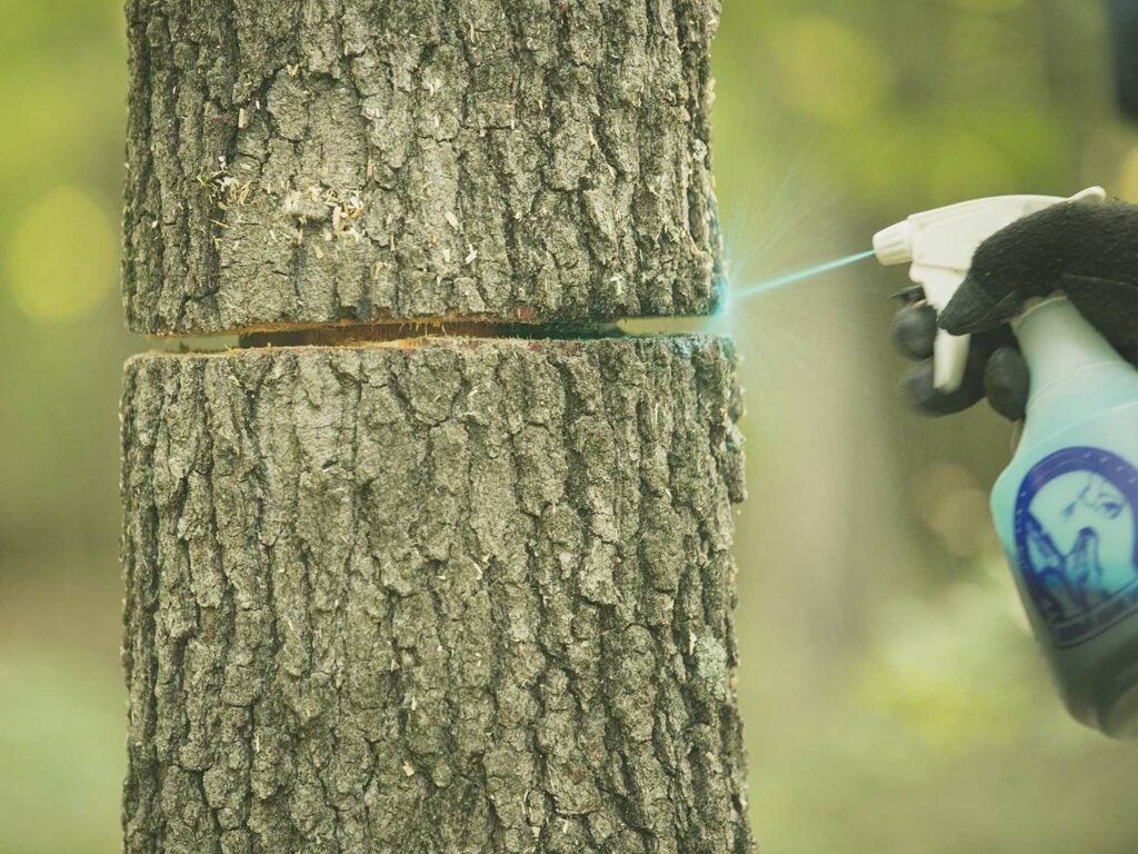 spraying a hinge-cut with blue liquid