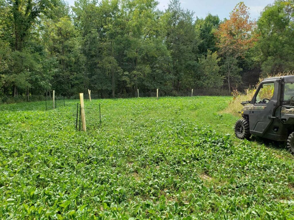 a food plot with a polaris ranger parked in it