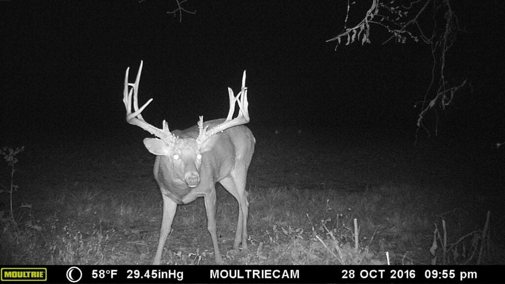 deer trail camera night time