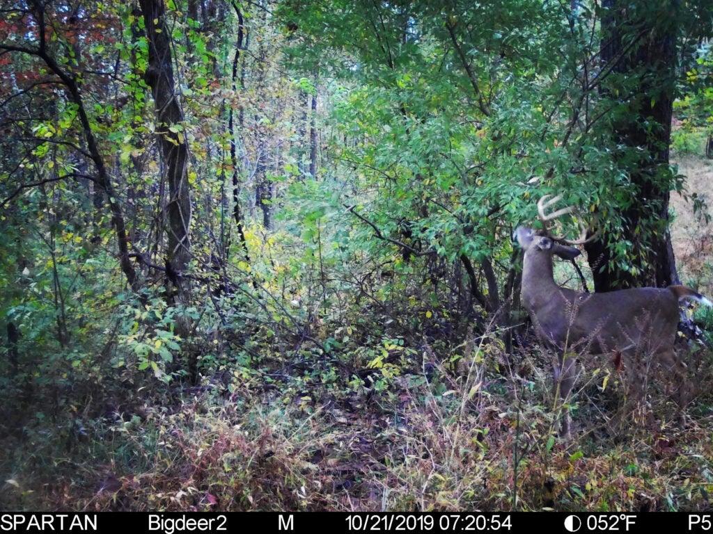 trail camera picture