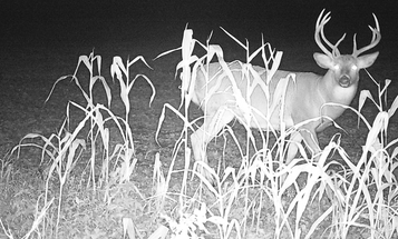 Sure, The Hottest Deer Hunting Tactics Are Nice. But the Best Tip is to Go with Your Gut During the Rut