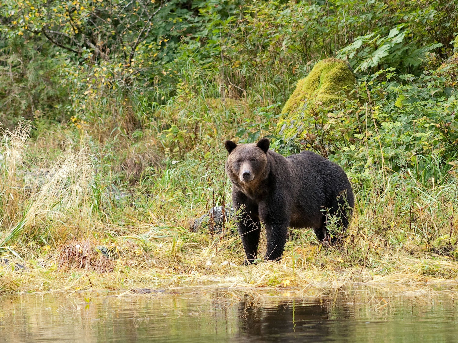 The Ultimate Rifle Cartridges for Grizzly and Brown Bears