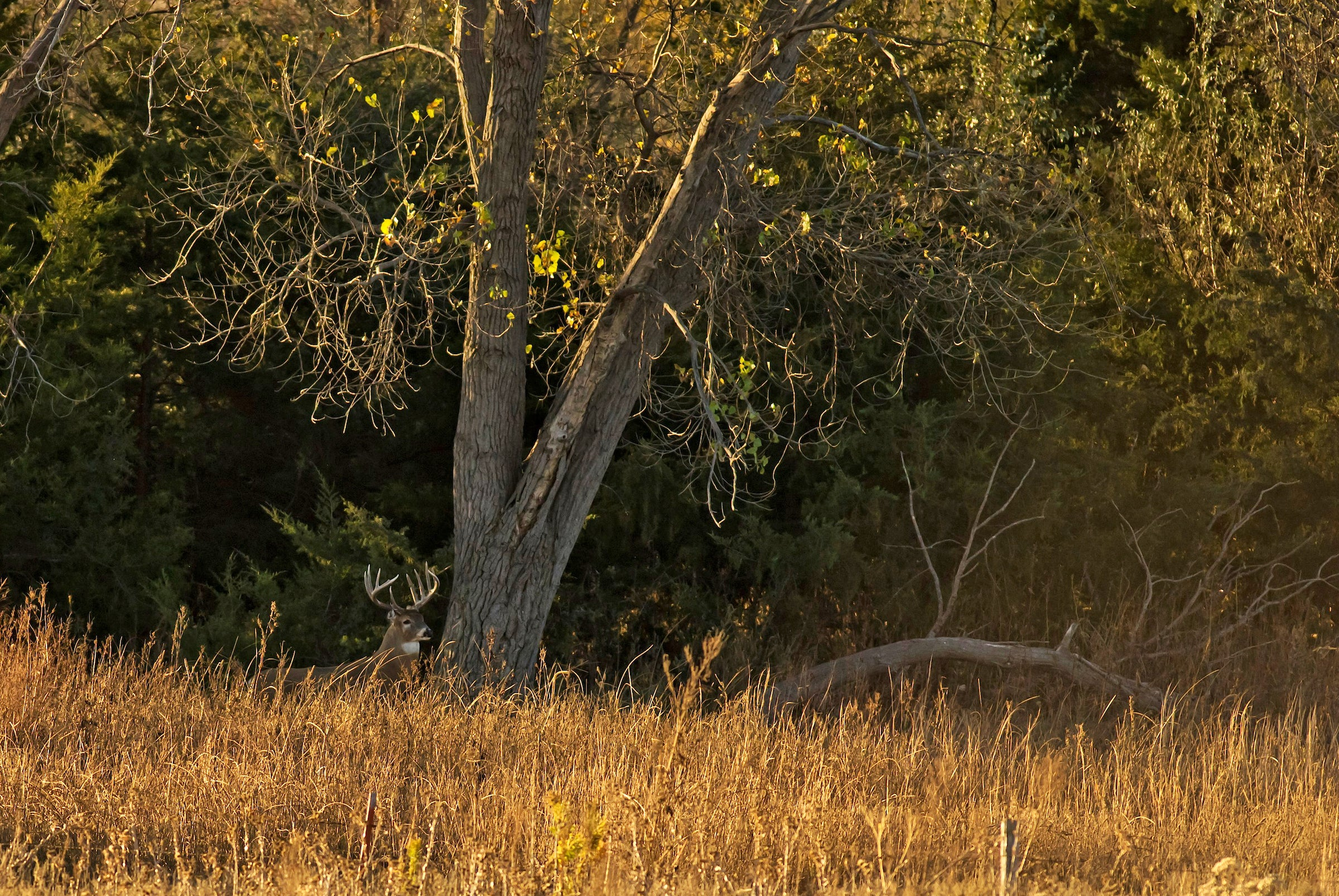 How to Be an Effective Deer Hunter When You Don't Have Enough Time to Go Deer Hunting