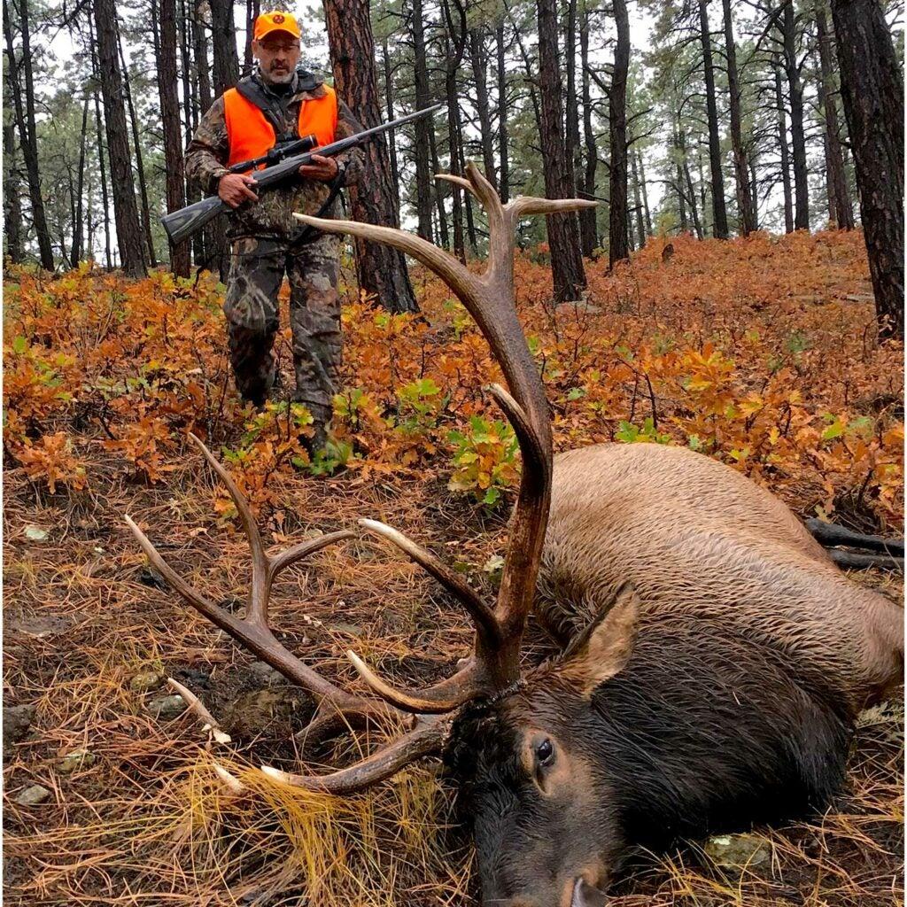 hunter walking up on a bull elk