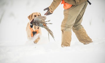 5 Tips for Solo Pheasant Hunting