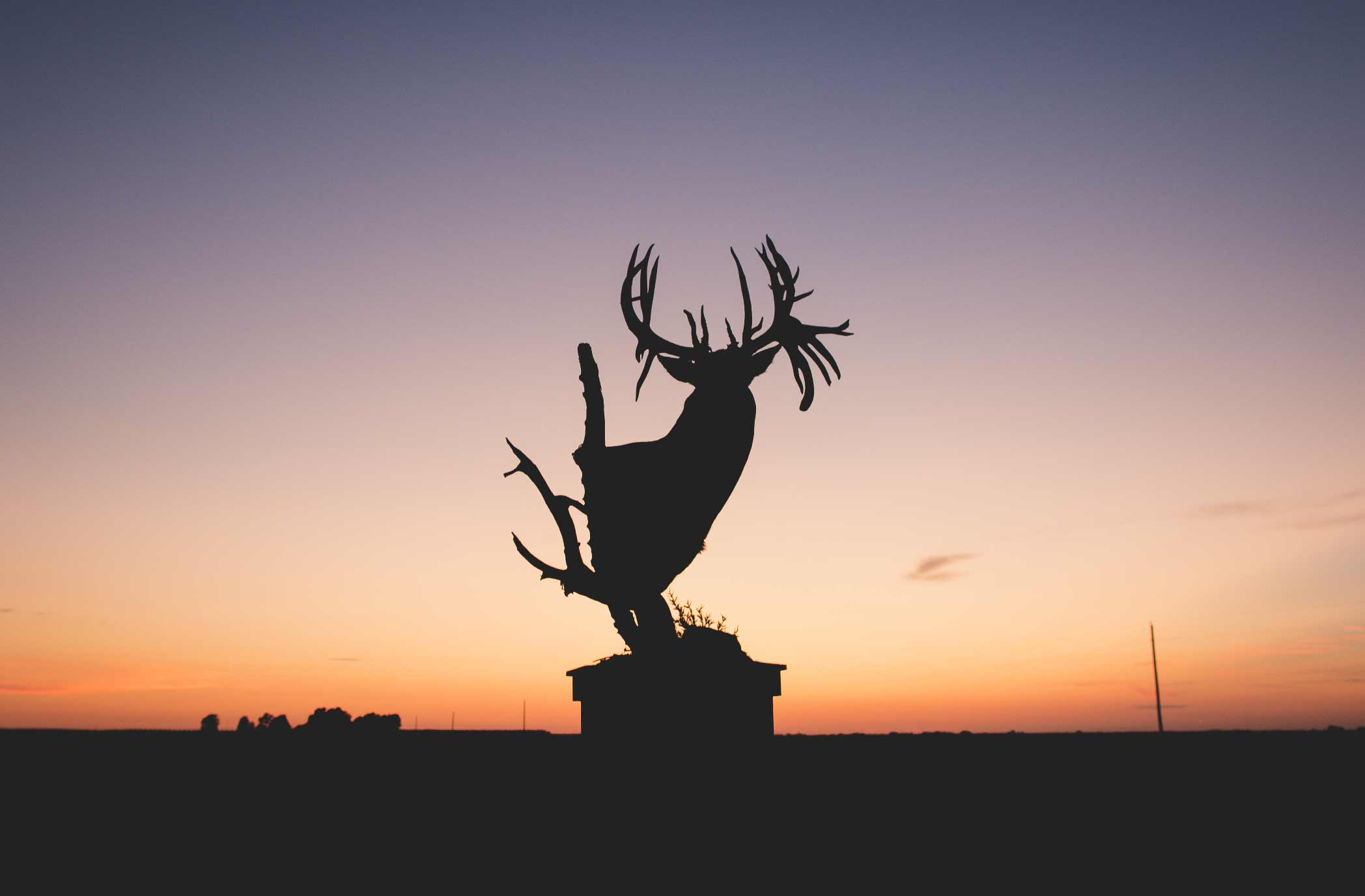 silhouette of a buck trophy against a sunset