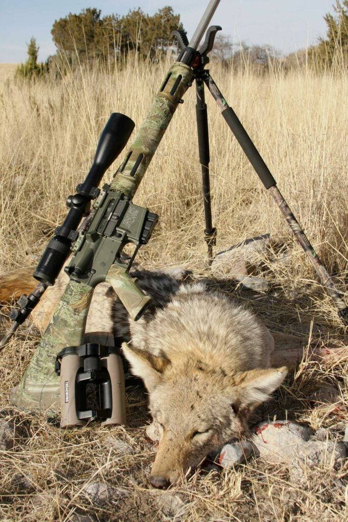 a coyote and a ar style rifle