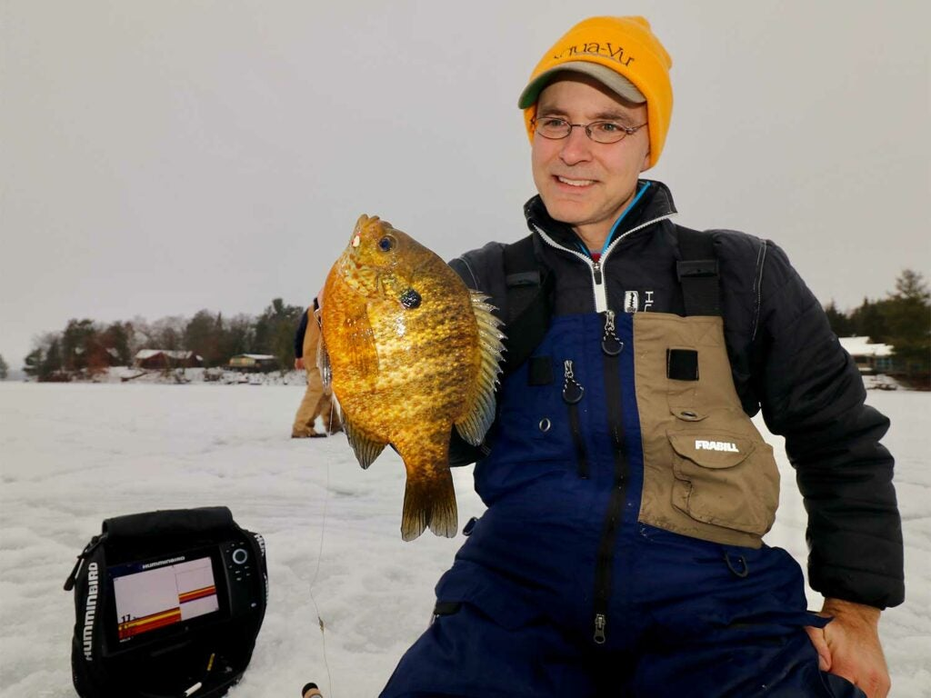 a bluegill caught while ice fishing.