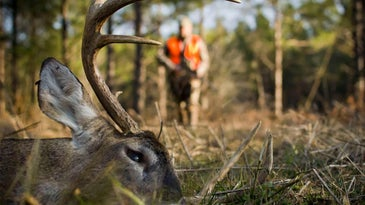 a dead deer in the woods with a hunter in the background