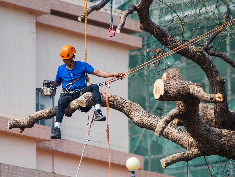 Construction working sitting on tree, cutting limb.