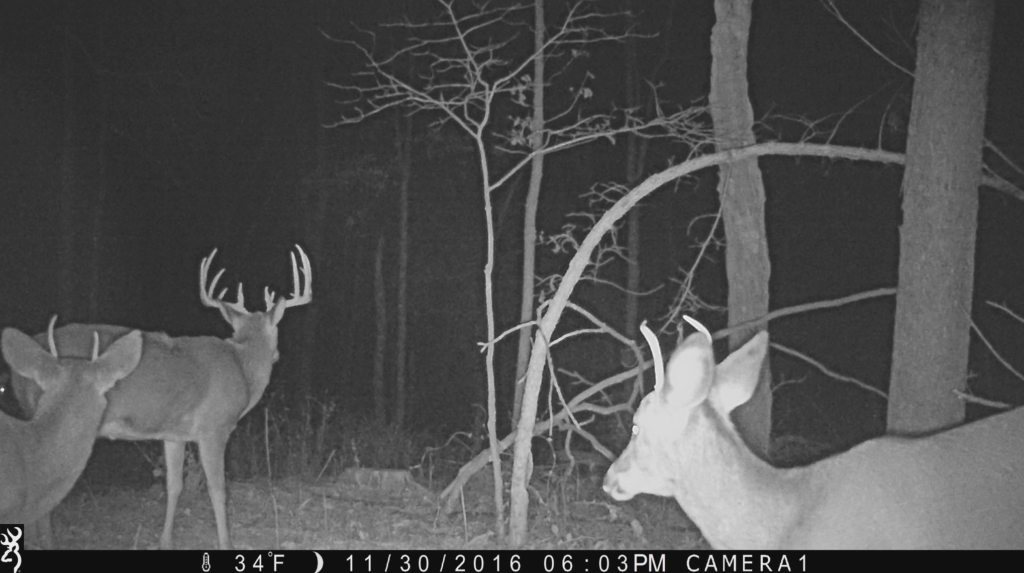 Trail cameras are invaluable tools during the waning days of deer season.