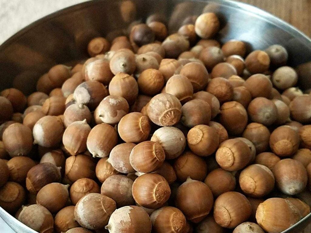 a bowl of acorns