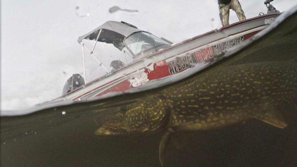 Rebekka Redd steers a giant pike towards the boat in Ontario, Canada.