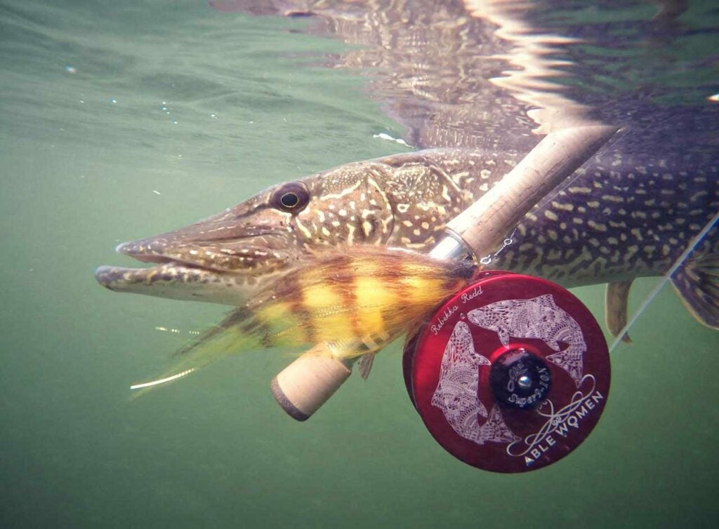 Big flies like this help to trigger a strike from big pike and muskie in dropping temperatures.