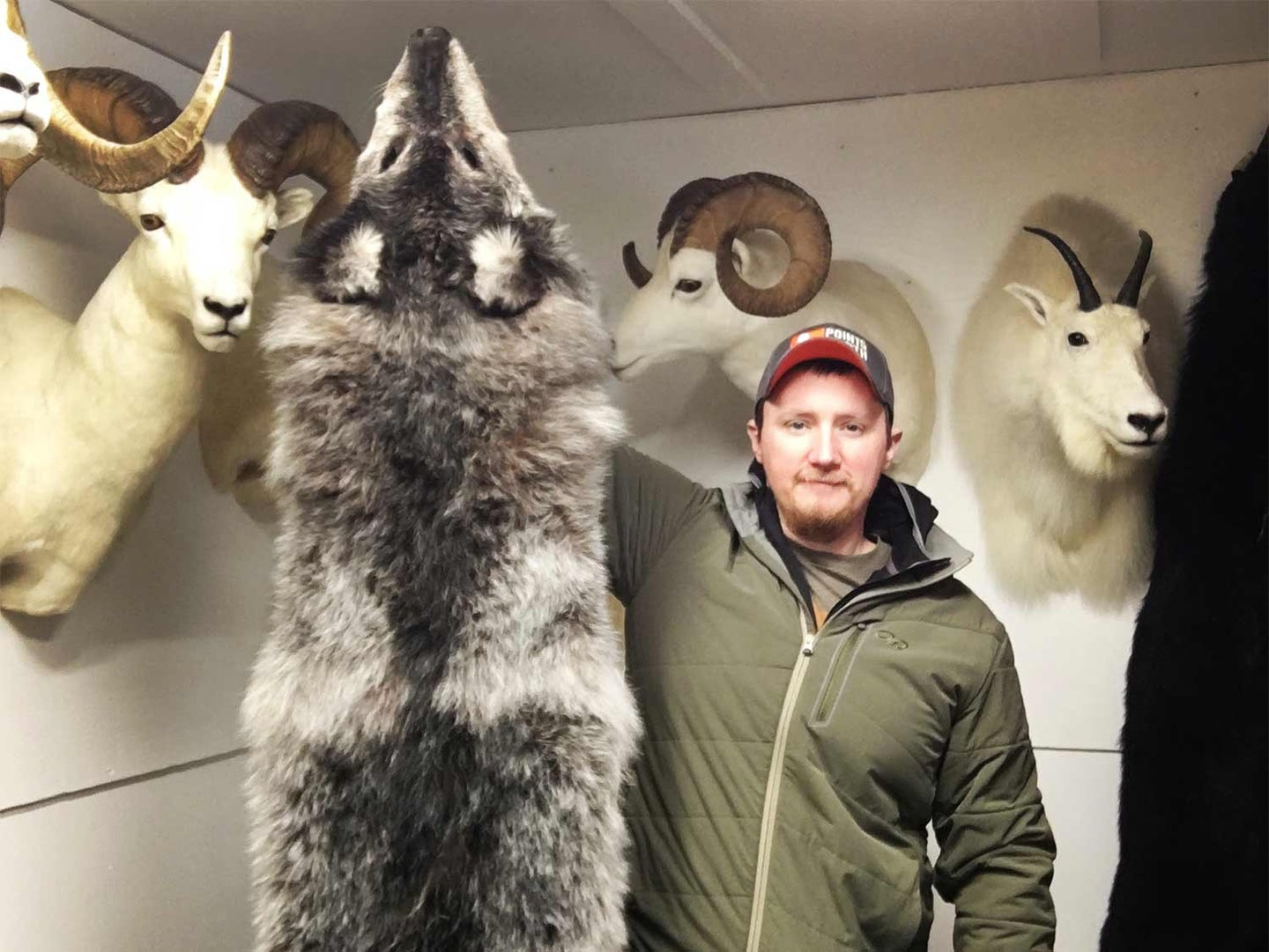 hunter holding up a large wolf pelt.