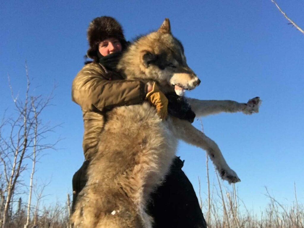 A hunter with a large wolf.