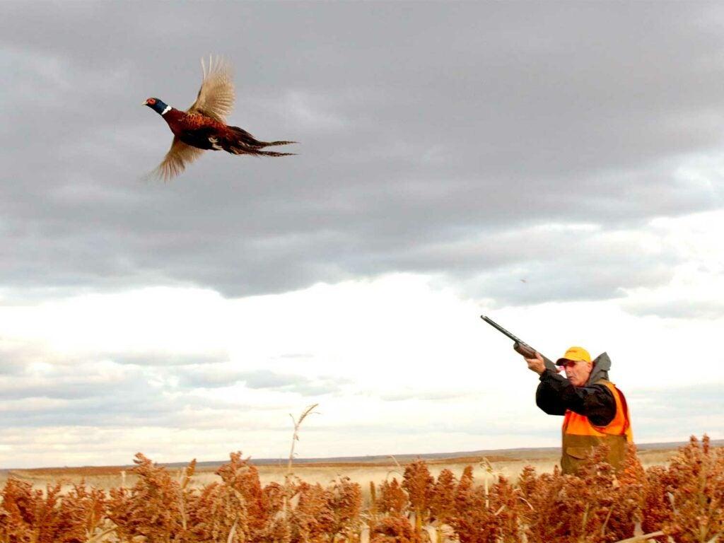 A pheasant hunter firing with a 12-gauge shotgun.