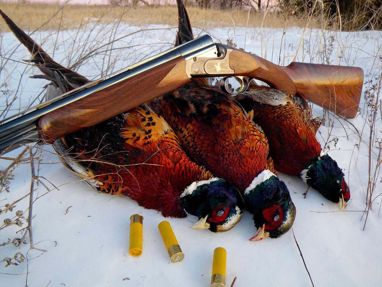 a limit of pheasants with a caesar guerini 20 gauge shotgun.