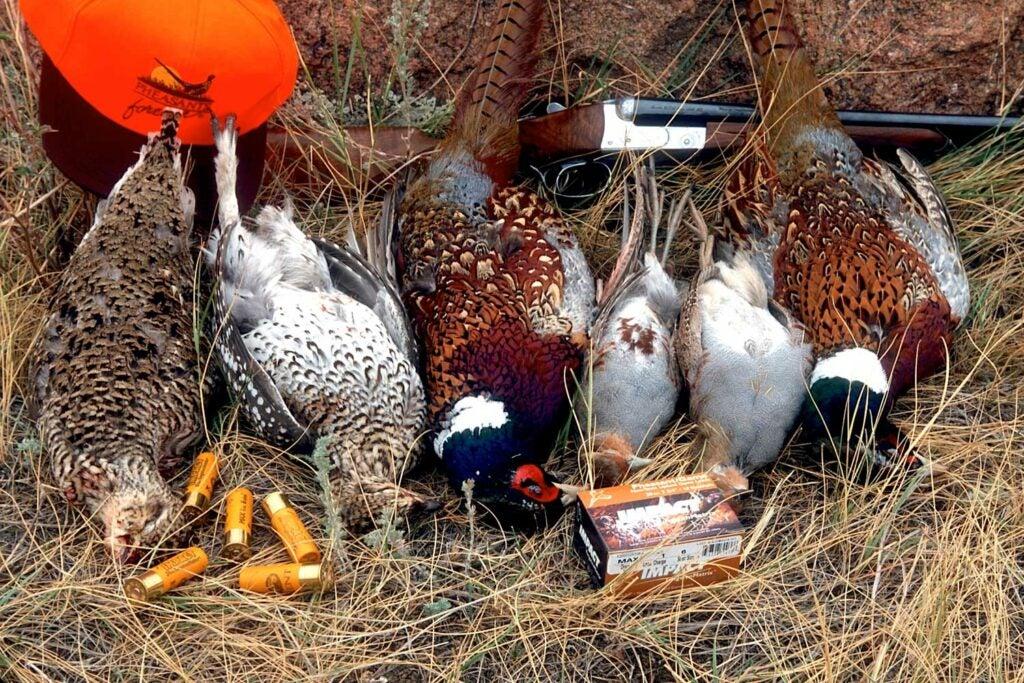 Hun, sharptail, pheasant mixed bag with a 20 gauge.