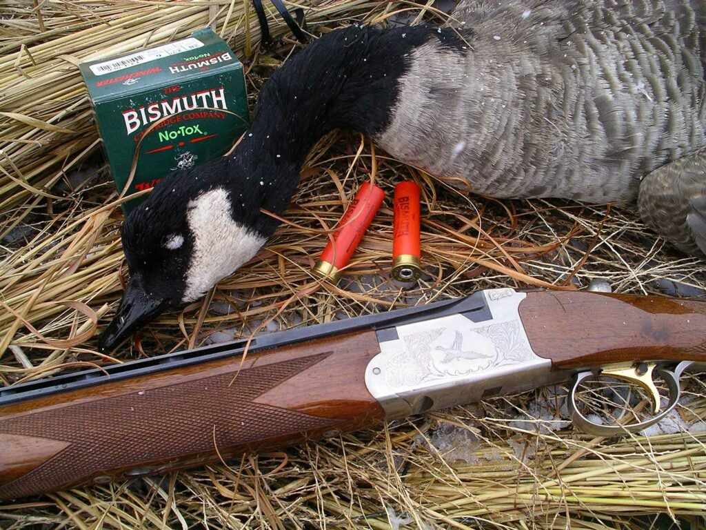 a goose shot with a shotgun.