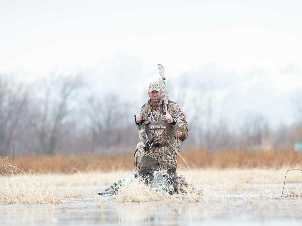 Fred Zink wading through a shallow marsh while duck hunting.