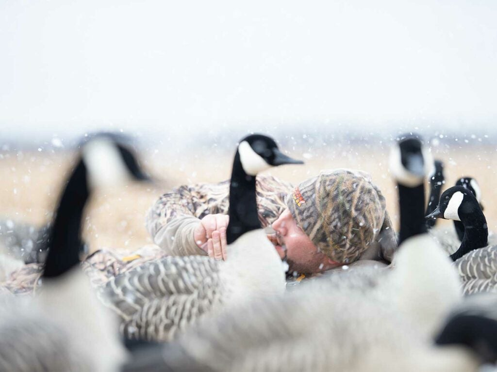 A hunter calling in geese near a decoy spread.