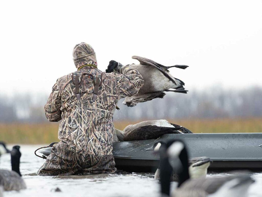 A hunter setting up a decoy spread in a marsh.