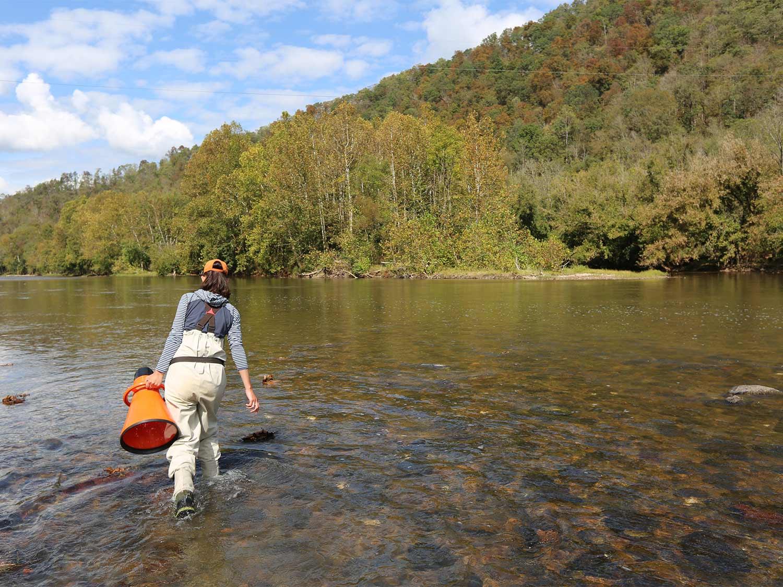 U.S. Fish and Wildlife Service bioligist wades a river.