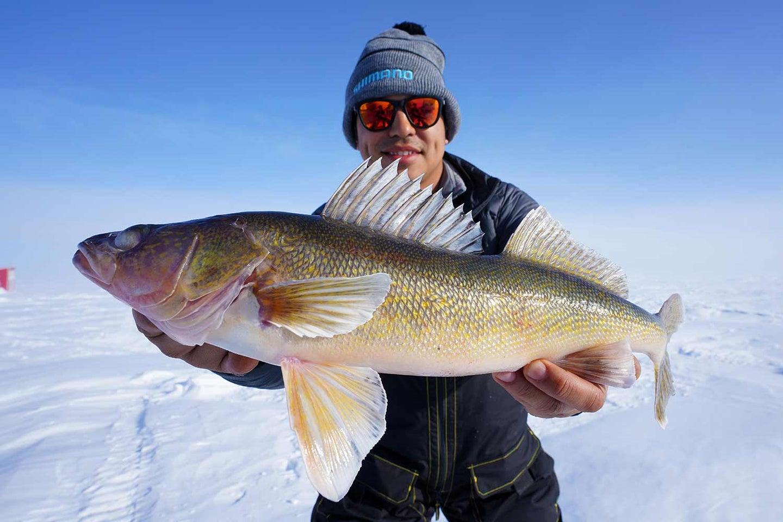 angler holding up giant walleye.